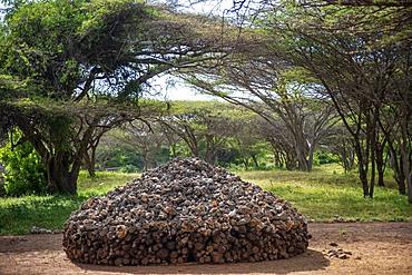 Tomb Ruins at Takwa on Manda Island near Lamu Kenya