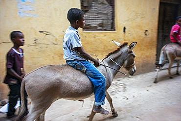 Young boy riding donkeys on the main street of Lamu town in Lamu Island, Kenya.