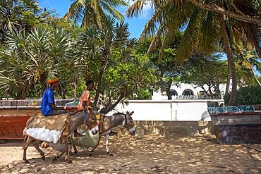 Man riding a donkey on Shela beach in the south of Lamu island archipelago in Kenya