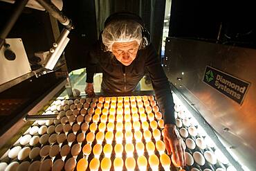 Egg sorter at a processing plant on egg farm