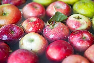 Apples, apple juice and cider press at a hard cider distillery