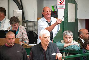 Auctioneer at a Hawes Sheep Auction in Yorkshire, England, UK.