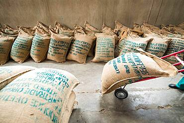 Addis Ababa, Ethiopia - Ethiopian worker carting hundreds of bags of arabica coffee beans read for export at Oromia Coffee Farmers Cooperative.