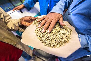 Addis Ababa, Ethiopia - Arabica coffee beans being graded by an optical coffee sorter at Oromia Coffee Farmers Cooperative.