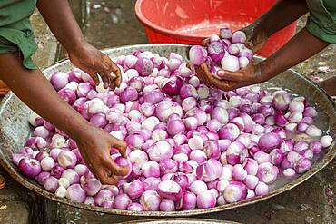 Meki Batu, Ethiopia - Onions being washed and peeled for added value at the Fruit and Vegetable Growers Cooperative in Meki Batu.