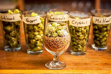 Various types of hops