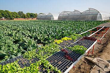 Crops growing and greenhouses on a farm in Punjab, India.