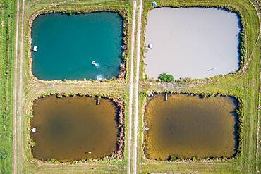 Algae colors the water in aquaculture ponds at the University of Georgia Tifton Campus Coastal Plain Experiment Station