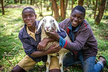 Boys holding onto sheep together and smiling, Kinigi, Rwanda