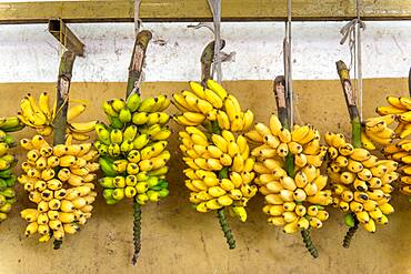 Bundles of bananas hung for sale at outdoor market, Rwanda Farmers Market, in Rwanda