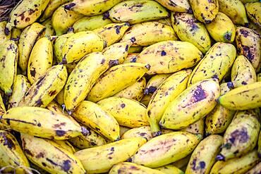 Close up of small bananas in basket,  Debre Berhan, Ethiopia