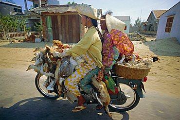 Motorcyclist and passenger carrying ducks, Vietnam