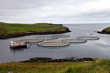 Salmon farm, Out Skerries, Shetland, Scotland, United Kingdom, Europe