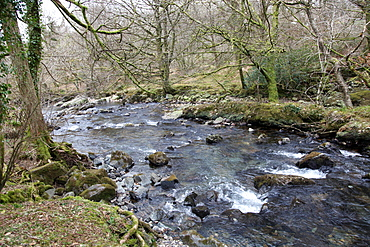Winter on the River Tavy on the western slopes of the Dartmoor National Park, Devon, England, United Kingdom, Europe