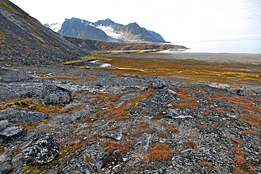 Glacial foreshore, Magdalenefjord, Svalbard Looking west