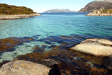 Rock and weed in harbour at Gasvaer, Kvalfjord, Troms, North Norway, Norway, Scandinavia, Europe
