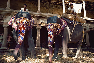 The Maharajah's elephants, Varanasi, Uttar Pradesh state, India, Asia