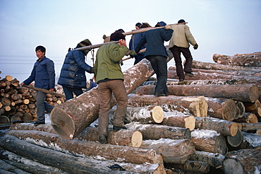 Logs being manhandled, Heilongjiang Province, north China, China, Asia