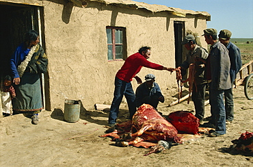 Tibetans preparing yak meat, Qinghai, China, Asia