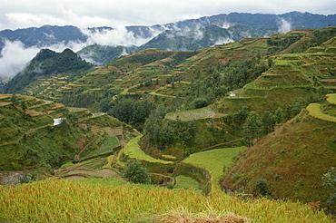 Terracing in southeast Guizhou, Guizhou, China, Asia
