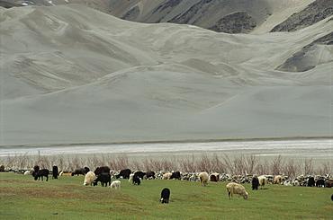 Scenery by the Karakoram Highway, Xinjiang, China, Asia