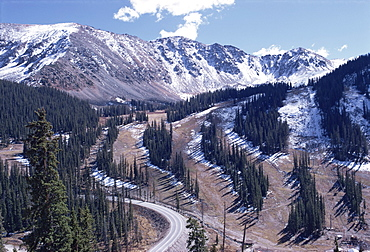 Erosion prevention, contoured bands of trees unfelled, also acting as fire break, Leadville, Colorado, United States of America, North America