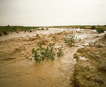 Flash flood in oued (river bed) in normally dry Algerian Sahara region, Algeria, North Africa, Africa
