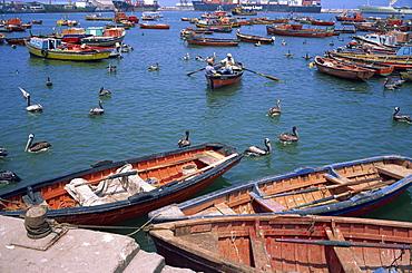 Fishing terminal, Arica, Chile, South America