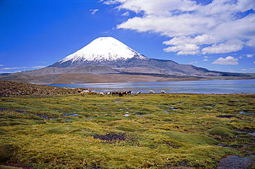 Lake Chungara and the snow capped volcano Parinacota, Lauca National Park, Andes, Chile, South America