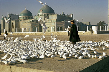 Pigeons at the mosque and shrine of Ali, Mazar-e Sharif, Afghanistan, Asia