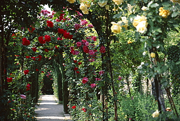 Arches covered with roses, Generalife gardens, Alhambra, UNESCO World Heritage Site, Granada, Andalucia (Andalusia), Spain, Europe