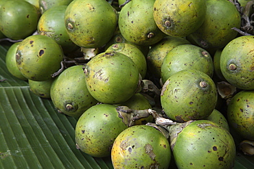 Betel nut, reported to be anti-parasitic, laxative and to promote urination, also proven to be a stimulant as it increases heart rate and blood pressure, India, Asia