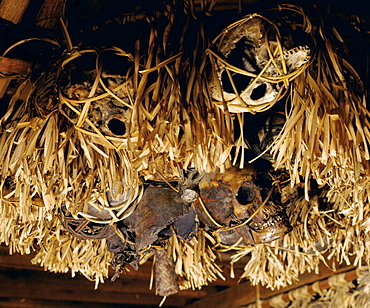 Trophy skulls from headhunting hang on display in a Longhouse gallery in Sarawak, Borneo, Malaysia, Southeast Asia, Asia