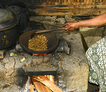 Kopi luwak, coffe harvested from the droppings of the palm civet, Ubud, Bali, Indonesia, Southeast Asia, Asia