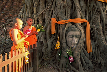 Two novice Buddhist monks with offerings, and Buddha head, Wat Phra Mahathat, Ayuthaya Historical Park, Ayuthaya (Ayutthaya), UNESCO World Heritage Site, central Thailand, Thailand, Southeast Asia, Asia