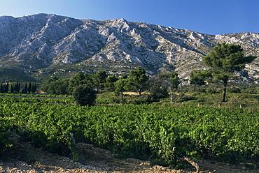 Vineyards and Montagne Ste. Victoire, near Aix-en-Provence, Bouches-du-Rhone, Provence, France, Europe