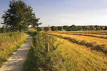 Dover Hill, Cotswold Way footpath, Gloucestershire, Cotswolds, England, United Kingdom, Europe
