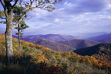 Area near Loft Mountain, Shenandoah National Park, Virginia, United States of America (U.S.A.), North America