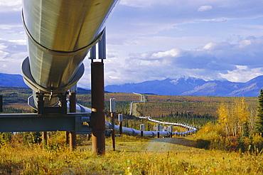 Trans Alaska oil pipeline across taiga through Alaskan Range carried on insulated ground piles, Alaska, USA