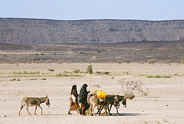 Afar women with donkeys carrying water in very dry desert, Danakil Depression, Ethiopia, Africa