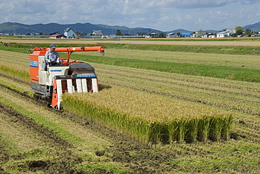 Rice harvest with mini-combine-harvester, Furano valley, central Hokkaido, Japan, Asia