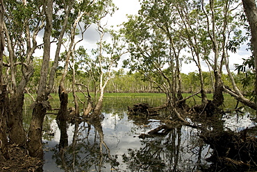Tabletop Swamp, on top of sandstone plateau in Litchfield National Park, near Darwin, Northern Territory, Australia, Pacific