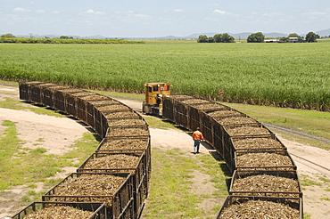 Machine-cut sugar cane in rail trucks outside mill, Ayr, Queensland, Australia, Pacific