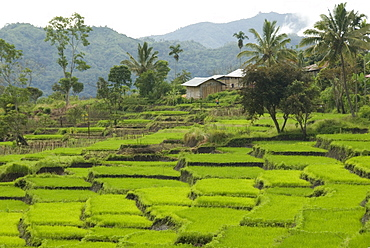 Waturaka valley, below Kelimutu volcano, Moni, eastern Flores, Nusa Tenggara, Indonesia, Southeast Asia, Asia