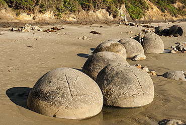 Septarian nodules washed out from cliff of Palaeocene clays, Moeraki Boulders, Dunedin, South Island, New Zealand, Pacific