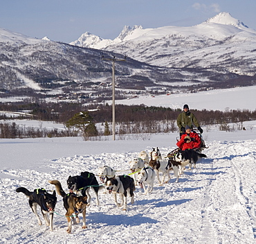 Dog sledding with huskies, Tromso wilderness centre, Norway, Scandinavia, Europe