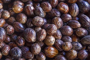 Nutmeg, Dougaldston Estate, Grenada, Windward Islands, West Indies, Caribbean, Central America