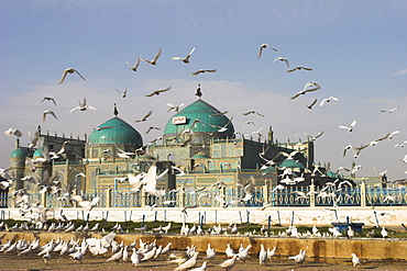 The famous white pigeons, Shrine of Hazrat Ali, Mazar-I-Sharif, Balkh province, Afghanistan, Asia