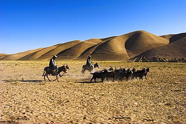 Men on donkeys tending goats, between Herat and Maimana, after Bala Murghah, Afghanistan, Asia