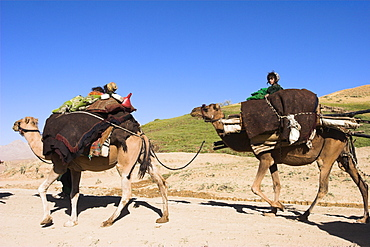 Children sitting on top of camels, Kuchie nomad camel train, between Chakhcharan and Jam, Afghanistan, Asia